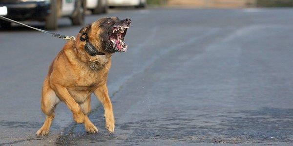 Large dogattack