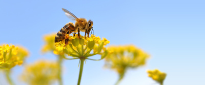 Though many people fear bees, their presence is a necessary part of life.