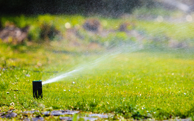 Gray water can be used for lawns and gardens.
