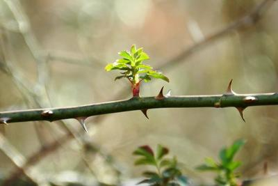 Prune your trees while they're dormant, not when new foliage appears.