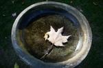 Mosquito larvae thrive in standing water like this birdbath.