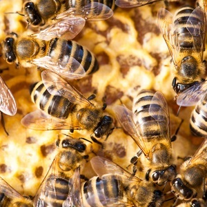 In the past, male bees were seen as lazy.