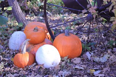 Pumpkins and gourds can function as classic fall decorations.