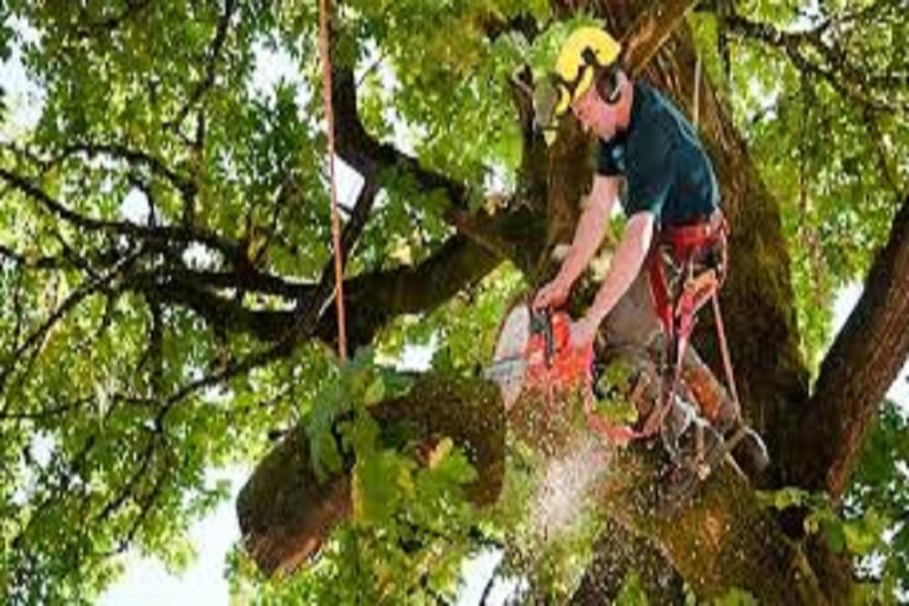 Treetrimming