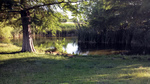 The Beverly S. Sheffield District Park (also known as Northwest District Park) is approximately 30 acres along Shoal Creek.