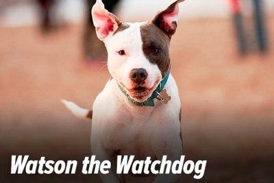 Medium watson watchdog bga
