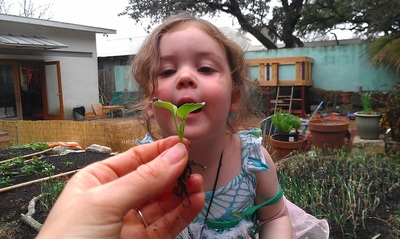 Isla Chapple studies a baby snail. Gardening provides abundant opportunities for children to learn about the natural world.