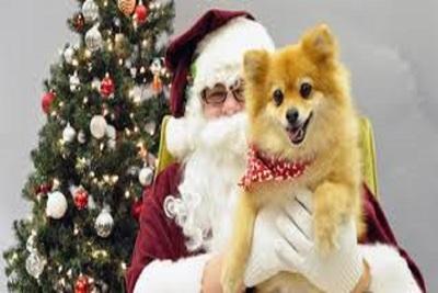 Medium santadog