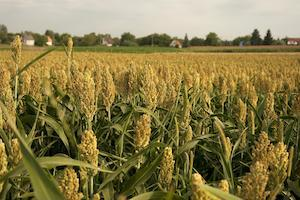 The McHenry Zoning Board of Appeals will meet Oct. 20 to discuss crop production services.