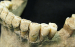 Kelli Creel's research will focus on studying microbes that are present within the dental tartar on skeletons from Rome.