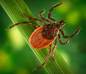 Tularemia warnings in New Mexico