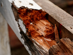 Rotted and damaged wood is the main problem with older decks in the Austin area.