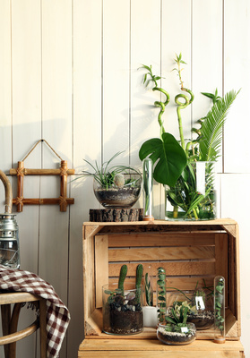 Plants can add style to all sorts of spaces.