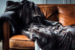 Leather is one of the most comfortable and popular options for couch material.
