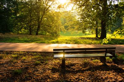 Medium park 11