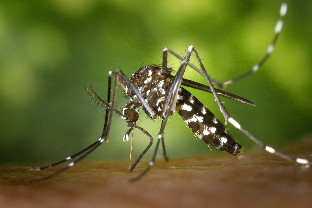 Aqua-Reslin was sprayed to kill all adult mosquitoes in a 3-mile radius around the city.