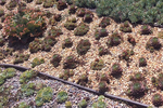 When xeriscaping is mentioned, most people imagine a lawn of rocks and cacti, but homeowners don't have to limit themselves to thorny options.