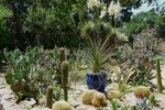 The Cactus Garden is one of Zilker Botanical Garden's many highlights.