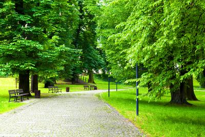 Medium park 02
