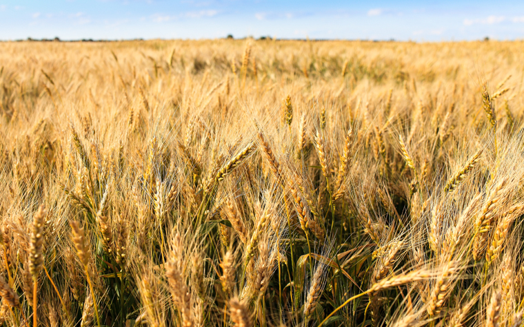 The National Association of Wheat Growers is pleased by the Senate Agriculture Committee recent action on the Grain Standards Act that sets the framework for the functioning of the U.S. Department of Agriculture's Federal Grain Inspection Service.