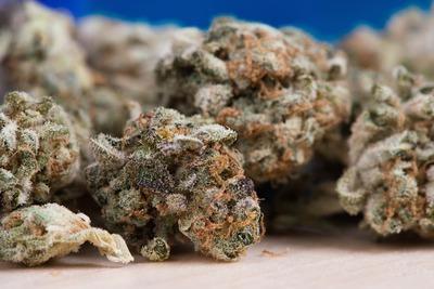 Medium marijuana1(1000)