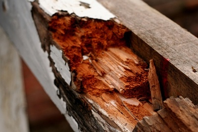 Wood rot can cause serious damage if not caught and remedied early in the process.
