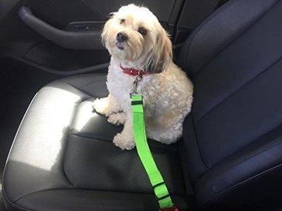 BSI Seat-Belt Leash