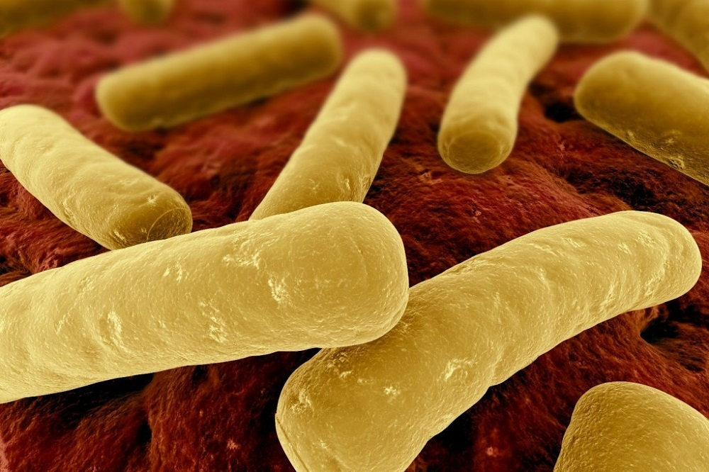 Clostridium difficile, a spore-forming pathogen, often targets people with altered gut microbial flora.