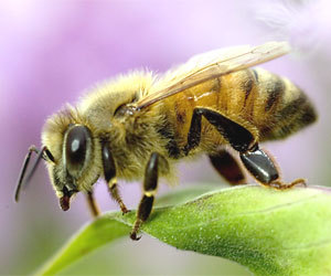A presidential task force has released a National Strategy to Promote the Health of Honey Bees and other Pollinators.