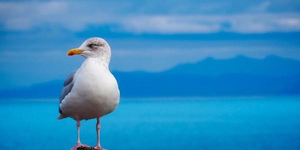 Large seabird bird seagull ocean 1280