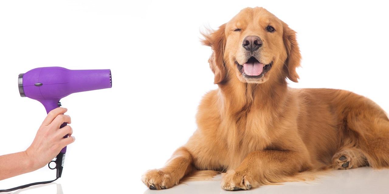 Doggroomer