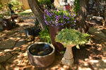 Use different types of pots when container gardening.