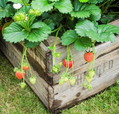 Urban farming can reap big benefits.
