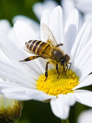 "Sen. James Inhofe urged the EPA to ""establish a clear casual link"" between the practical and realistic use of neonicotinoids and decrease in bee population."