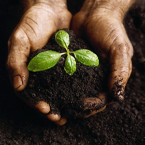 Protassium+ Organic does not require as much product to be applied as other fertilizers.