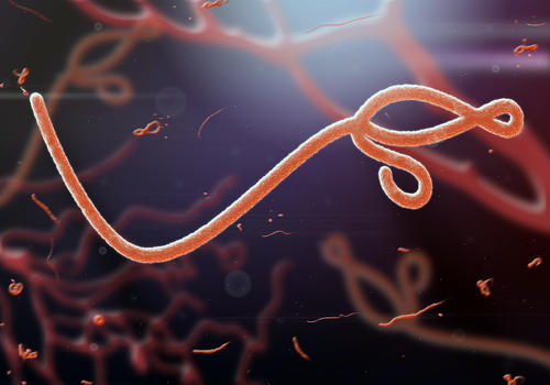 Johnson & Johnson said it will begin a Phase 1 trial of an Ebola test vaccine.