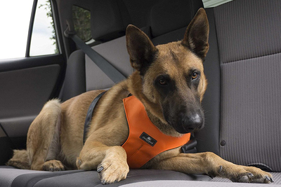 A dog harness is extra protection for the family pet in a car.