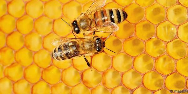 Large beehive