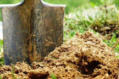 Adding compost or manure to your garden soil now will prepare it for spring planting.