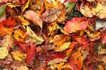 Add fallen leaves to the compost pile.