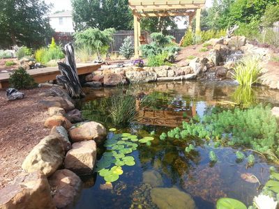 Ponds like this water garden are becoming more popular in the Austin area.