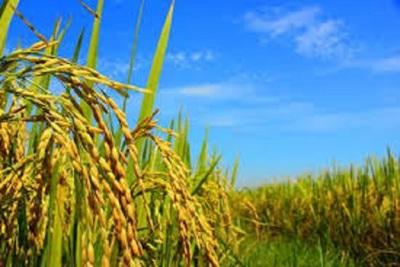 Medium crops