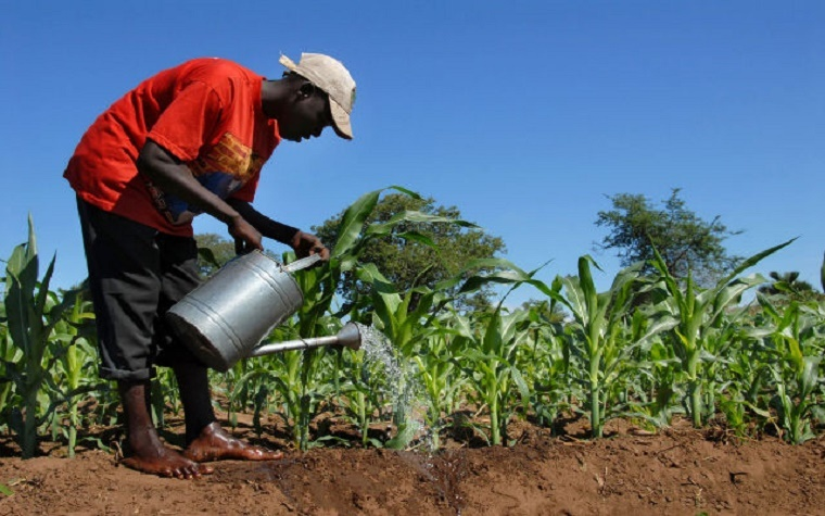 The African Development Bank and KfW have announced a collaboration that aims to advance the agricultural transformation agenda across Africa.