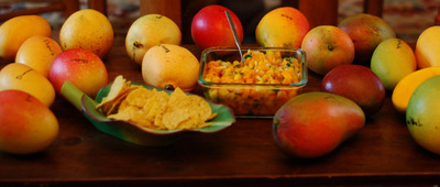 A bowl of mango salsa surrounded by an assortment of mangoes all grown at the Fairchild Tropical Botanic Garden but with genetic origins from all over the world.