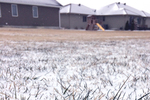 Though snow covering is rare in Austin, prepping a lawn for cold months is a good practice.