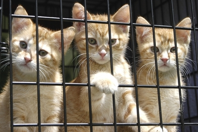 Medium shutterstock animal shelter kittens