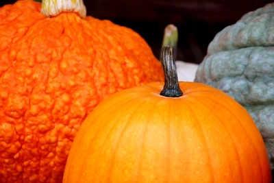 Heirloom and hybrid pumpkins and squash add to the Halloween decor.
