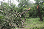 Trees can be damaged or destroyed in high wind storms.