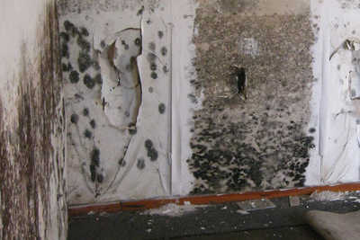 Black mold is one of the most unwelcome of house guests, bringing a host of potential helath complications with it.
