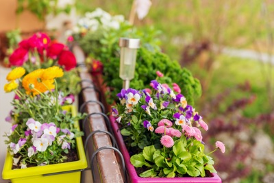 Container gardening takes some practice, so it is best to start with hardy plants and be ready for a little disappointment along the way.
